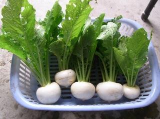 f:id:Small_Vegetable:20110523195621j:image