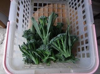 f:id:Small_Vegetable:20110523195622j:image