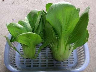 f:id:Small_Vegetable:20110523195623j:image