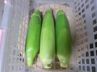f:id:Small_Vegetable:20110523195627j:image