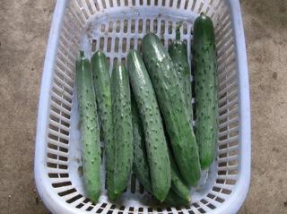 f:id:Small_Vegetable:20110620192415j:image