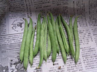 f:id:Small_Vegetable:20110908224427j:image