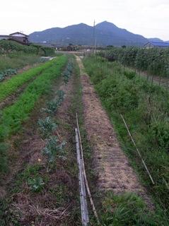 f:id:Small_Vegetable:20111006213147j:image
