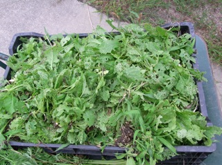 f:id:Small_Vegetable:20111006213149j:image
