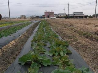 f:id:Small_Vegetable:20120113215705j:image