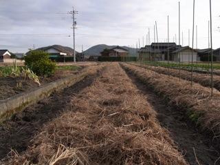 f:id:Small_Vegetable:20120121211415j:image