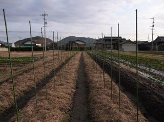 f:id:Small_Vegetable:20120121211416j:image
