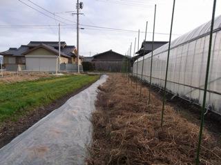 f:id:Small_Vegetable:20120121211419j:image