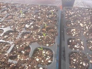 f:id:Small_Vegetable:20120203225727j:image