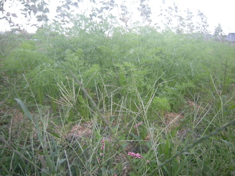 f:id:Small_Vegetable:20121011203108j:image
