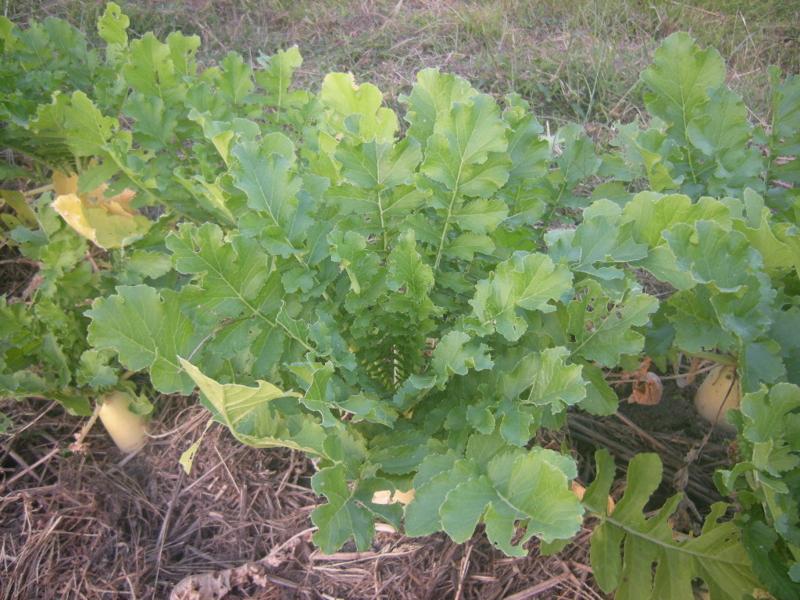 f:id:Small_Vegetable:20121011203111j:image