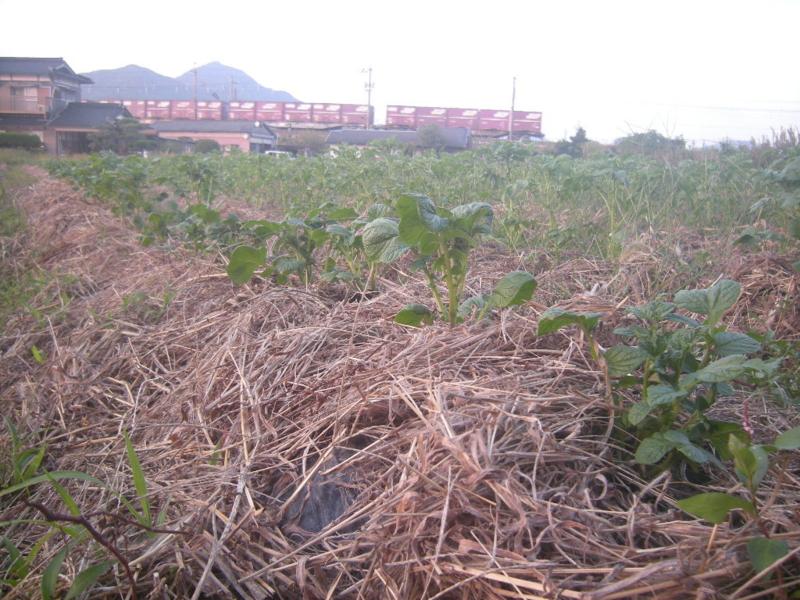 f:id:Small_Vegetable:20121011203128j:image