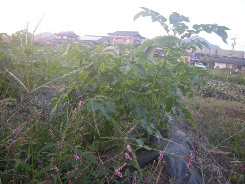 f:id:Small_Vegetable:20121011203129j:image