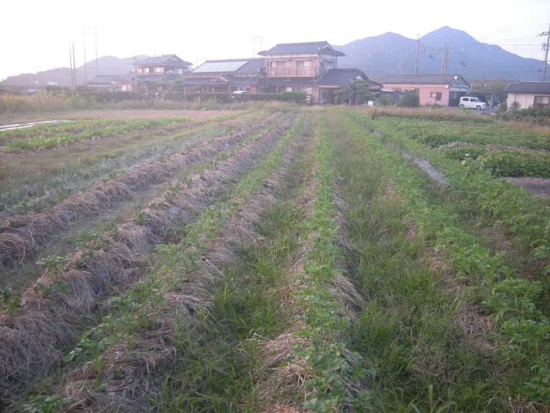 f:id:Small_Vegetable:20121011203131j:image
