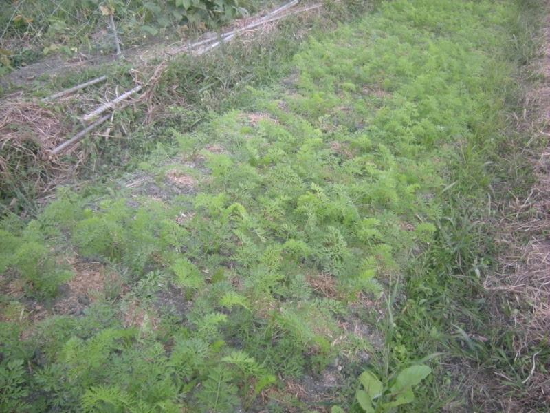 f:id:Small_Vegetable:20121011203258j:image