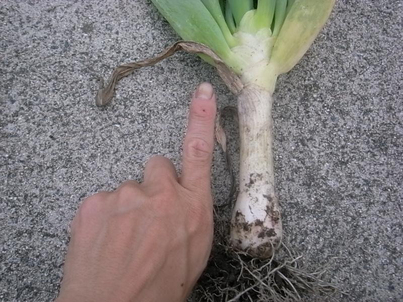f:id:Small_Vegetable:20130627221532j:image:w360