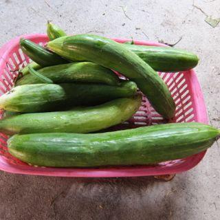 f:id:Small_Vegetable:20150814121544j:image