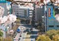 [熊本][路面電車][風景]1094? 2011-04-06 13:35:30
