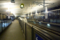 さくら@熊本駅 2011-05-12 20:41:40
