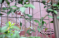 [電車][路面電車][熊本市電]5014 2012-09-03 15:23:47