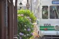[熊本市電][電車][路面電車]1356 2014-05-31 17:26:57