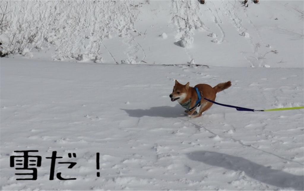 f:id:Snowkey:20200223214347j:image