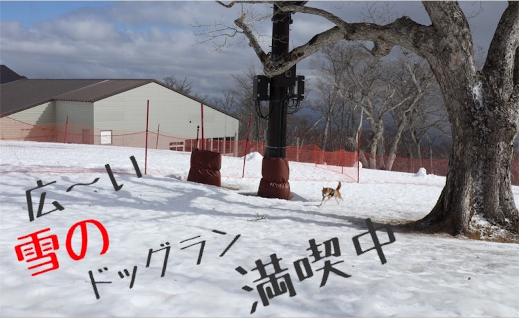 f:id:Snowkey:20200223214400j:image