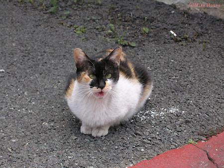 声をかけると必ず「にゃあ」と返事してくれる近所の猫@熊本市 2006/04/