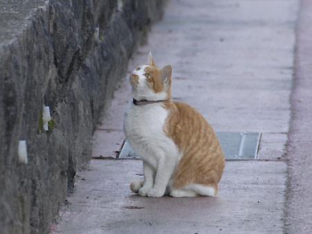 いきなり膝に乗ってきた猫 2007/01/04