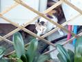 [猫]実家の裏口で。寝ていたのを起こしたので不機嫌そう(^^;。2008/07/16