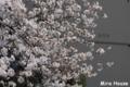 [桜] 2009/03/25