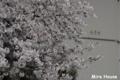[桜] 2009/03/29