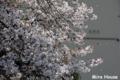 [桜] 2009/04/01