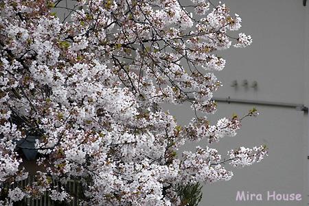 f:id:Snowowl:20090403150438j:image