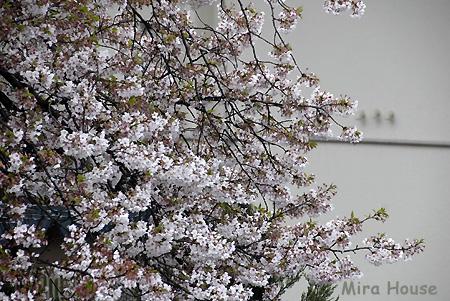 f:id:Snowowl:20090404163918j:image