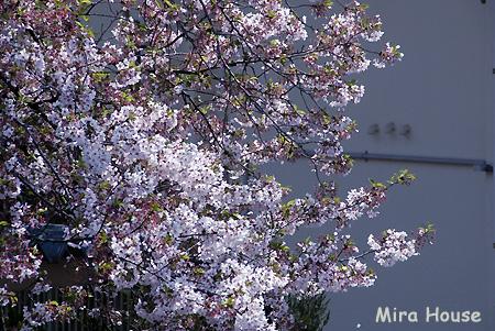 f:id:Snowowl:20090406121318j:image