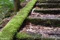 [苔]五家荘せんだん轟の滝にて 2006-04-27 11:35:34