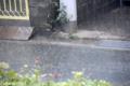 [雨]2009-07-11 10:36:42    1/60
