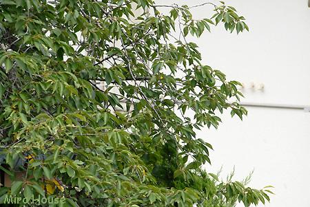 f:id:Snowowl:20090813151056j:image