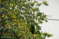 [桜]2009-08-28