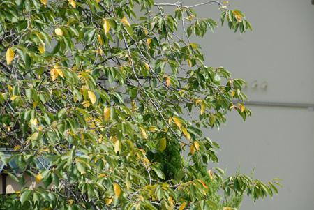 f:id:Snowowl:20090831165908j:image