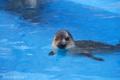 [水族館]2009-09-09 海の中道マリンワールドにて