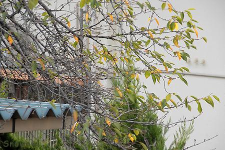 f:id:Snowowl:20091009164935j:image