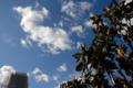 [空][雲]2009-11-18 10:52:56 東京都文京区