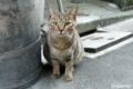 [猫]2009-10-22 16:02:50 文京区根津