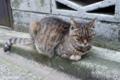 [猫]2009-10-22 16:02:26 文京区根津