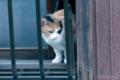 [猫]2009-10-24 東京都文京区