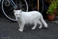 [猫]2009-11-06 15:53:15 文京区根津
