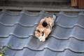 [猫]2009-11-21 09:39:28 東京都文京区