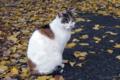 [猫]2009-12-07 10:30:24 東京都台東区 不忍池ほとり
